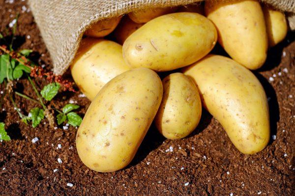 Importing Fresh potatoes